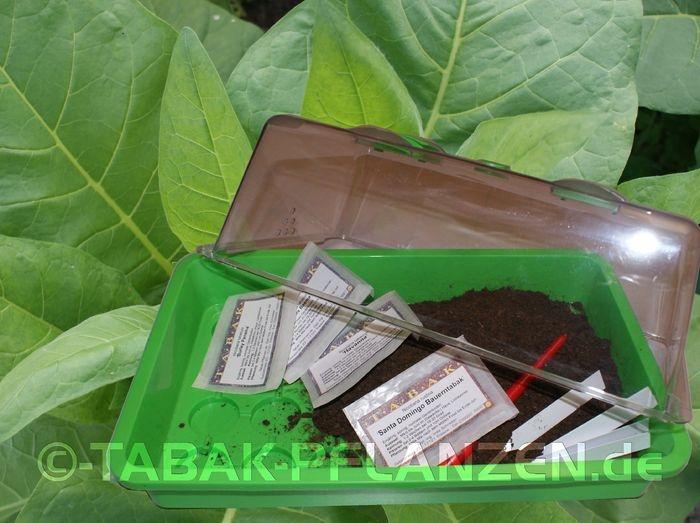 Geschenk idee tabakanbau set tabaksamen rauchtabak for Idee geschenk garten